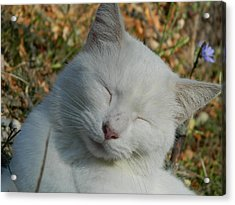 Acrylic Print featuring the photograph Napping Barn Cat by Kathy Barney