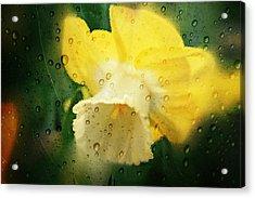 Narcissi Acrylic Print