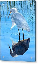Narcissus Acrylic Print by AnnaJo Vahle