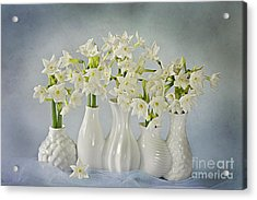 Narcissus 'paperwhites' Acrylic Print by Jacky Parker