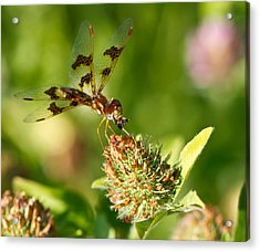 Acrylic Print featuring the photograph Nashoba Winery Dragonfly by John Hoey