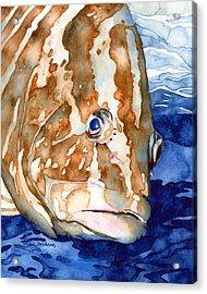 Nassau Grouper Portrait Acrylic Print