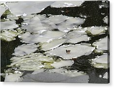 Nasty Weather - Featured 3 Acrylic Print by Alexander Senin