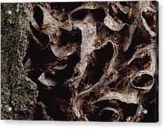 Nasute Termite Nest Amazonian Peru Acrylic Print by Mark Moffett