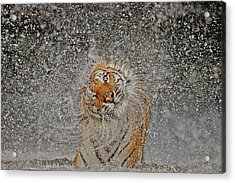 Nat Geo Recognition A?? The Explosion Acrylic Print by Ashley Vincent
