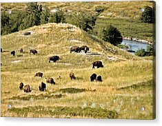 National Bison Range Moiese Mt Acrylic Print by Christine Till
