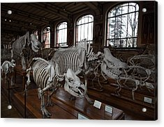 National Museum Of Natural History - Paris France - 01132 Acrylic Print by DC Photographer