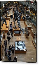 National Museum Of Natural History - Paris France - 011328 Acrylic Print by DC Photographer