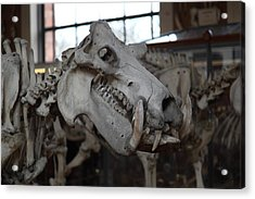 National Museum Of Natural History - Paris France - 01133 Acrylic Print by DC Photographer