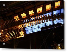 National Museum Of Natural History - Paris France - 011340 Acrylic Print by DC Photographer