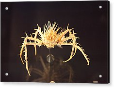National Museum Of Natural History - Paris France - 011342 Acrylic Print by DC Photographer