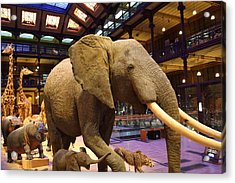 National Museum Of Natural History - Paris France - 011378 Acrylic Print