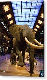 National Museum Of Natural History - Paris France - 011383 Acrylic Print by DC Photographer