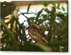 National Zoo - Birds - 011314 Acrylic Print by DC Photographer