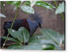 National Zoo - Birds - 011329 Acrylic Print by DC Photographer