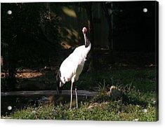 National Zoo - Birds - 12128 Acrylic Print