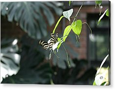 National Zoo - Butterfly - 12125 Acrylic Print by DC Photographer