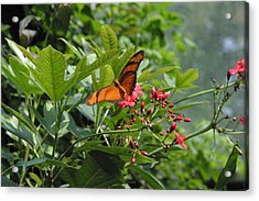 National Zoo - Butterfly - 12126 Acrylic Print by DC Photographer