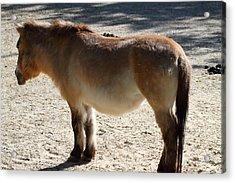 National Zoo - Donkey - 01134 Acrylic Print by DC Photographer