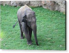National Zoo - Elephant - 01139 Acrylic Print by DC Photographer