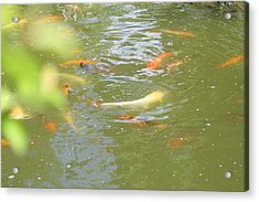 National Zoo - Fish - 011316 Acrylic Print by DC Photographer