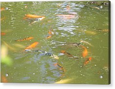 National Zoo - Fish - 011317 Acrylic Print by DC Photographer