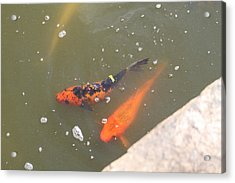 National Zoo - Fish - 01132 Acrylic Print by DC Photographer