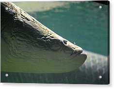 National Zoo - Fish - 12122 Acrylic Print by DC Photographer