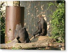 National Zoo - Gorilla - 121223 Acrylic Print by DC Photographer