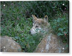 National Zoo - Large Mammal - 12125 Acrylic Print by DC Photographer