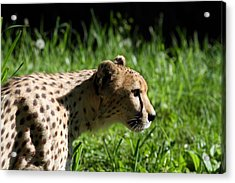 National Zoo - Leopard - 011316 Acrylic Print