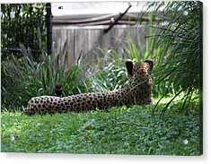 National Zoo - Leopard - 01135 Acrylic Print