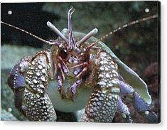 National Zoo - Sea Life - 12127 Acrylic Print by DC Photographer