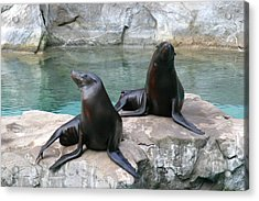 National Zoo - Sea Lion - 12124 Acrylic Print