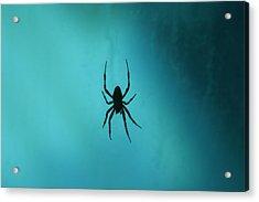 National Zoo - Spider - 12121 Acrylic Print
