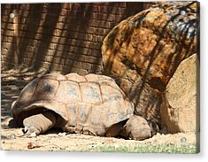 National Zoo - Turtle - 01133 Acrylic Print by DC Photographer