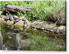 National Zoo - Turtle - 01136 Acrylic Print by DC Photographer