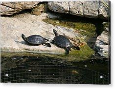 National Zoo - Turtle - 12123 Acrylic Print
