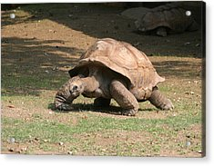 National Zoo - Turtle - 12129 Acrylic Print by DC Photographer