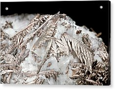 Native Silver Acrylic Print by Natural History Museum, London