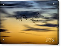 Natural Abstract Art Acrylic Print