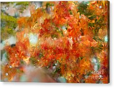 Natural Abstractions #12 The Orange Tree Acrylic Print