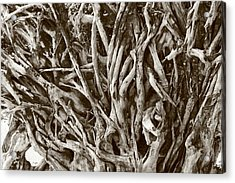Natural Artwork Acrylic Print