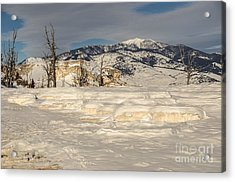Natural Beauty Acrylic Print