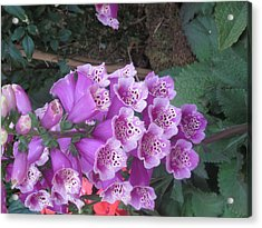 Acrylic Print featuring the photograph Natural Bouquet Bunch Of Spiritul Purple Flowers by Navin Joshi