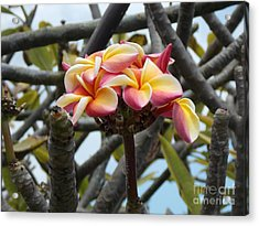 Natural Bouquet  Acrylic Print by Mindy Sue Werth