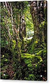 Natural Emeralds. I Wicklow. Ireland Acrylic Print by Jenny Rainbow