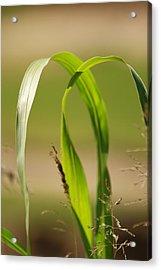 Natural Grass Acrylic Print by Tinjoe Mbugus