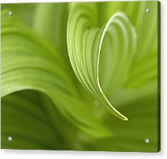 Natural Green Curves Acrylic Print by Claudio Bacinello