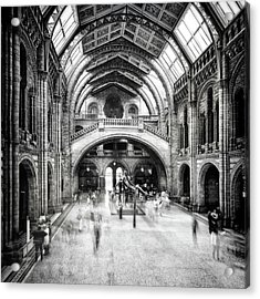 Natural History Museum Of London Acrylic Print